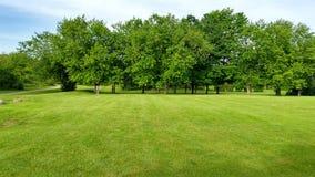 Árvores por um gramado verde em um parque Imagens de Stock Royalty Free