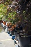 Árvores Potted Imagens de Stock