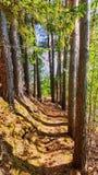 Árvores próximas Fotografia de Stock Royalty Free