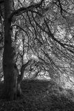 Árvores preto e branco, fundo da floresta Foto de Stock Royalty Free