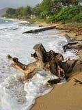 Árvores que abraçam a costa Fotografia de Stock