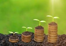 Árvores que crescem em moedas Foto de Stock