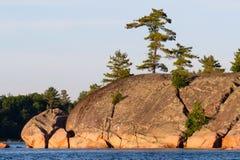 Árvores que crescem fora das grandes rochas na linha costeira Imagem de Stock Royalty Free