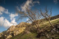 Árvores que crescem fora do montanhês Fotos de Stock Royalty Free
