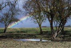 Árvores que crescem no prado verde com arco-íris foto de stock