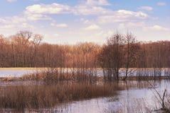 Árvores que estão na primavera na água sob um céu nebuloso Floresta inundada pelo fluxo da mola do rio Molhe a natureza dinamarqu fotografia de stock royalty free
