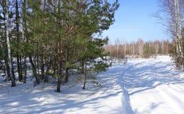 Árvores que estão perto da estrada em um dia de inverno ensolarado imagem de stock