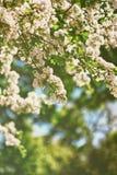 Árvores que florescem na mola de Leeds Castle Kent Reino Unido do parque imagem de stock royalty free