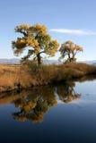 Árvores que refletem fotografia de stock royalty free