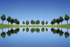 Árvores que refletem Imagens de Stock