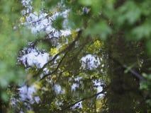 Árvores que refletem em uma lagoa fotos de stock