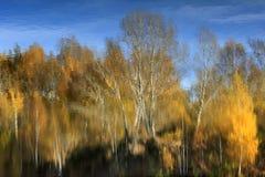 Árvores que refletem na água. Imagem de Stock