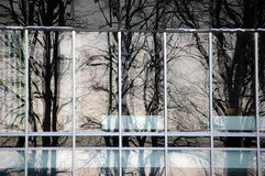 Árvores que refletem no prédio de escritórios Foto de Stock Royalty Free