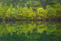 Árvores que refletem no reservatório de Prettyboy em Baltimore County, março fotografia de stock