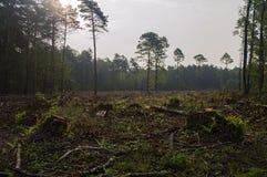 Árvores quebradas na floresta após fortes vento Imagens de Stock