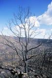 Árvores queimadas Fotos de Stock Royalty Free