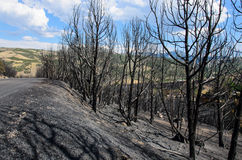 Árvores queimadas fotografia de stock royalty free