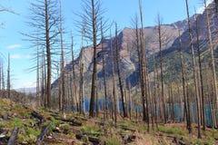 Árvores queimadas na geleira Imagens de Stock Royalty Free