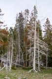 Árvores queimadas por Geyser Fotos de Stock Royalty Free