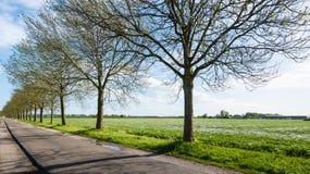 Árvores recentemente de brotamento em uma fileira longa ao lado de uma estrada secundária Foto de Stock