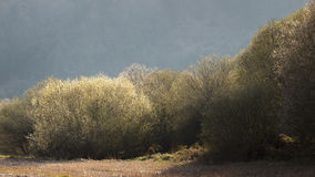 Árvores redondas, Espanha Foto de Stock Royalty Free