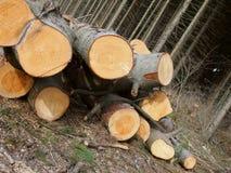 Árvores reduzidas Fotos de Stock Royalty Free
