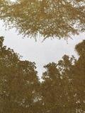 Árvores refletidas Imagem de Stock
