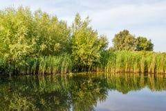 Árvores refletidas, arbustos e plantas de lingüeta Fotos de Stock Royalty Free