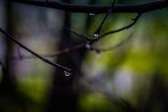 Árvores refletidas em uma gota Foto de Stock Royalty Free
