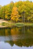 Árvores refletidas na água Fotos de Stock
