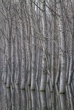 Árvores refletidas na água Foto de Stock Royalty Free