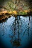Árvores refletidas na água fotografia de stock royalty free