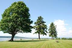 Árvores resistentes Fotografia de Stock Royalty Free