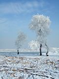 Árvores rimadas Imagens de Stock