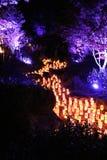 Árvores roxas ao longo do rio da vela Imagens de Stock Royalty Free