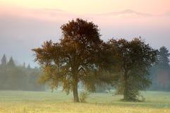 Árvores sós foto de stock
