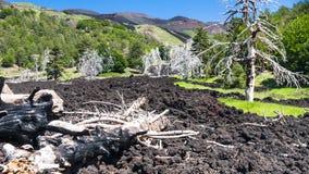 Árvores secadas no fluxo de lava endurecido em Etna imagem de stock