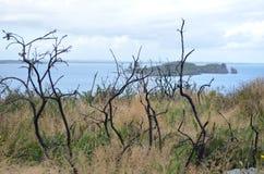 Árvores secadas pela costa de mar em Howth, Irlanda Imagens de Stock Royalty Free