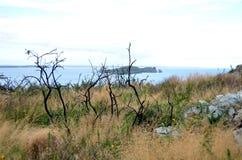 Árvores secadas pela costa de mar em Howth, Irlanda Imagem de Stock Royalty Free