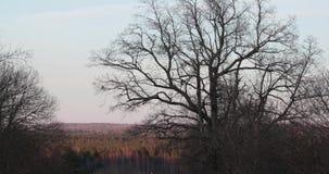 Árvores secas com ramos assustadores vídeos de arquivo