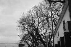 Árvores secas em algum lugar em Caracas Foto de Stock Royalty Free