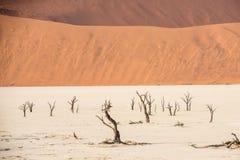 Árvores secas inoperantes distantes do vale de DeadVlei no deserto de Namib Imagens de Stock Royalty Free