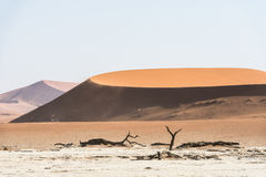 Árvores secas inoperantes do vale de DeadVlei no deserto de Namib Imagens de Stock Royalty Free