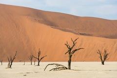 Árvores secas inoperantes do vale de DeadVlei no deserto de Namib Fotos de Stock Royalty Free