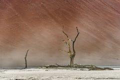 Árvores secas inoperantes do vale de DeadVlei no deserto de Namib Foto de Stock