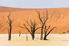 Árvores secas inoperantes próximas do vale de DeadVlei no deserto de Namib Foto de Stock