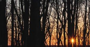 Árvores secas na primavera contra o por do sol filme