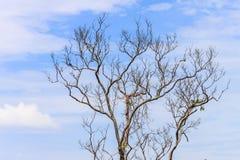 Árvores sem as folhas no céu Imagens de Stock Royalty Free