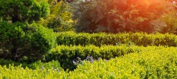 Árvores sempre-verdes, arbustos e flores azuis compossition do elemento do jardim Imagens de Stock