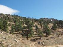 Árvores sempre-verdes em uma montanha fotografia de stock